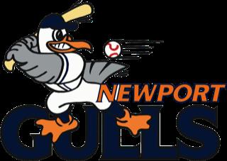 newport gulls